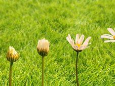 Voucher Consiliere Psihologica, Floarea Luminita