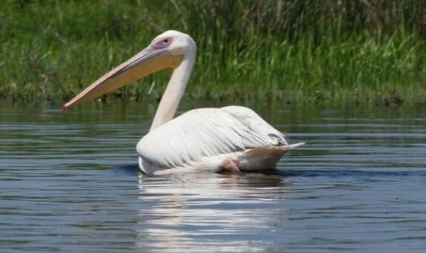 Excursie de o zi in Delta Dunarii - descopera cea mai mare biodiversitate din tara