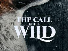 Iasi: Orange Pop-Up Cinema: The Call of the Wild (2020)