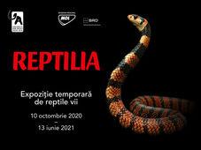 Expozitia temporara Reptilia